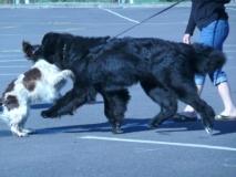 More-Dog-Fun