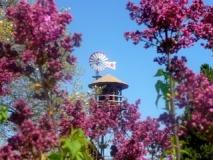 Hulda-Klager-Lilac-Gardens