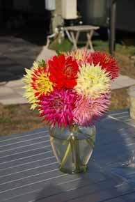 Dahlias from David's Yard