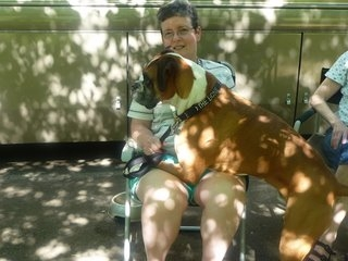 Lois-lapdog-Bruiser-